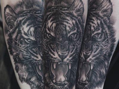 black and grey tattoo, realism tattoo, surrealism tattoo , smooth tattoo, tiger tattoo, wilde life tattoo, soft shading tattoo